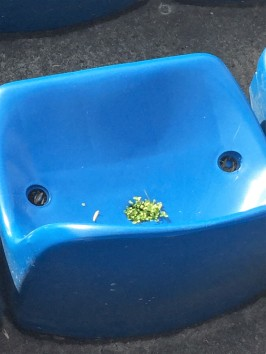 Leaves sprout through the seats at the Vicente Calderon, which will be demolished at the end of the season.